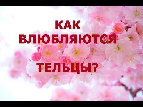 💕 КАК ВЛЮБЛЯЮТСЯ ТЕЛЬЦЫ?  ♉ ПОДАРКИ ДЛЯ ТЕЛЬЦОВ! 🍰