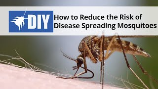 How to Reduce the Risk of Disease Spreading Mosquitoes