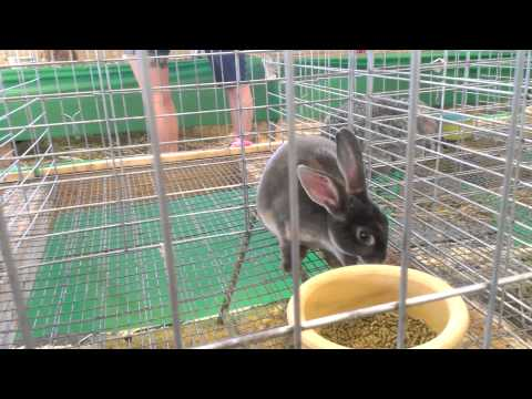 What a rabbit thinks at the Erie County Fair