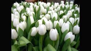 Дети и Цветы Самые радостные подарки женщинам .... Цветы для Вас Родные(Моё первое видео ,для Вас дорогие мамы ,сестры,подруги и просто замечательные женщины..., 2014-08-21T10:21:33.000Z)