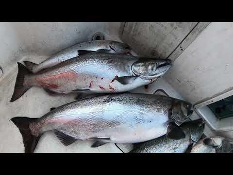 Trolling For King Salmon In Lake Ontario