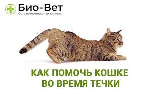 Течка У Кошек & Как Помочь Кошке Во Время Течки. Ветклиника Био-Вет