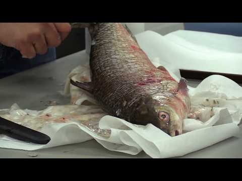 How To Remove Fish Scales Without Using A Scaler