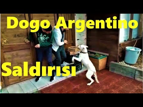 Arjantin Dogosuna şaka yapınca bakın ne oldu !