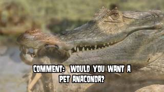 World's Largest Snakes!  Real and Fake!  Pythons & Anacondas