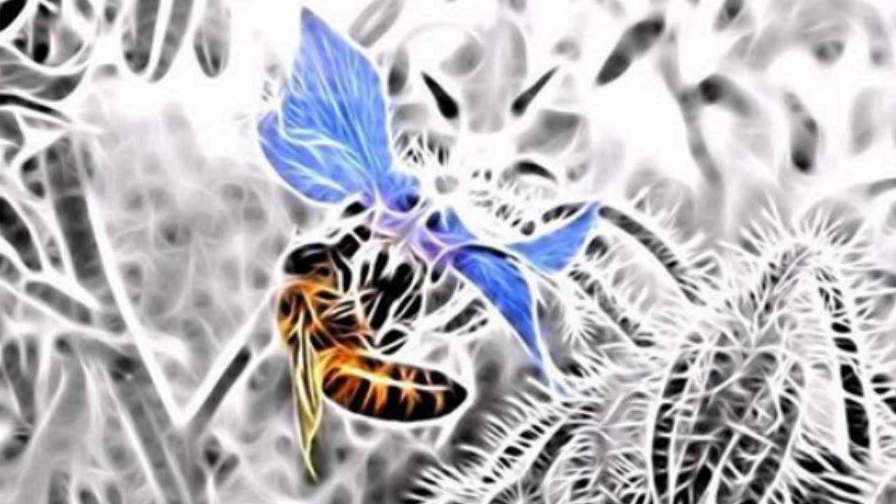 План по селекции украинской степной породы пчел - Гладкий Сергей