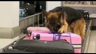 Собаки-Защитники / Четвероногие служители порядка в студии / ЕТВ
