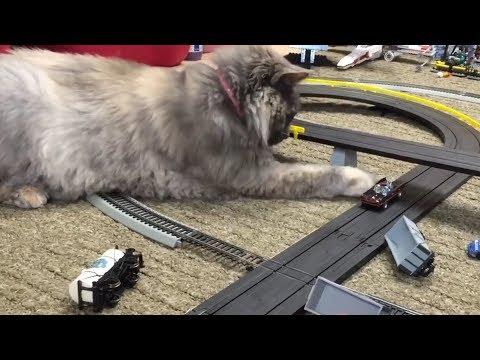 Cat vs Batmobile Slot Car vs iPad and Duck Thomas and Friends Train
