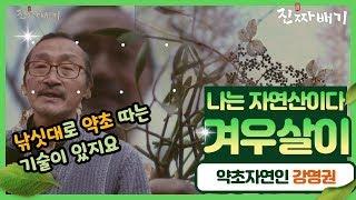 [#나는자연산이다] 약초 달인이 알려주는 야생의 겨우살…