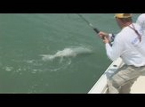 Sanibel Tarpon Tango! Florida Tarpon Fishing Trips Charters
