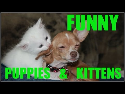 Funny  Puppies And Kittens Compilation Try Not To Laugh 2016