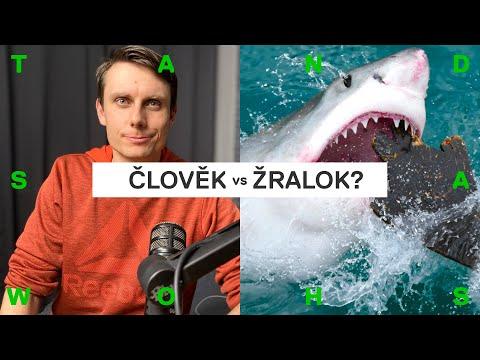 Jak se ubránit útoku žraloka? Chovejte se k němu jako k ratlíkovi (Patreon bonus)