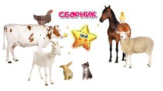 Сборник Мультфильмов по Системе Монтессори⭐Учим Животных | Учим Цвета⭐Развивающие Мультики для Детей