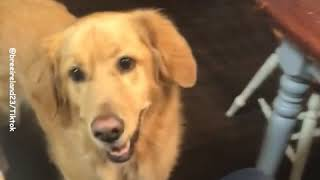 Funny Magic Tricks With Pets