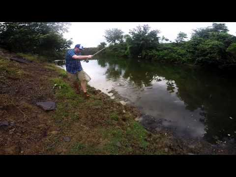 Blue Gill Fishing at Holland Ranch