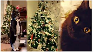 Cat christmas tree Коты и ёлки СМЕХОТЕРАПИЯ ПРИКОЛЫ 2020 СМЕШНЫЕ ЖИВОТНЫЕ 2020 COUB ANIMALS