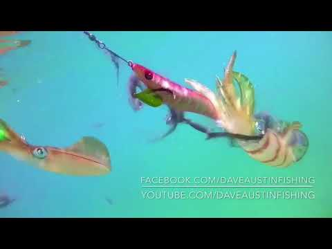 How To Catch Bait Jervis Bay Fishing