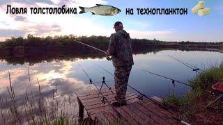 Ловля толстолобика на самодельный технопланктон Рыбалка на карпа и толстолоба Фрунзенский рыбалка