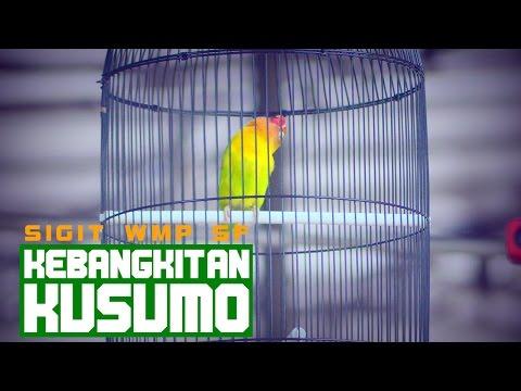 PRESIDEN CUP IV - Kebangkitan Kusumo Menjuarai Kelas Love Bird DPR A