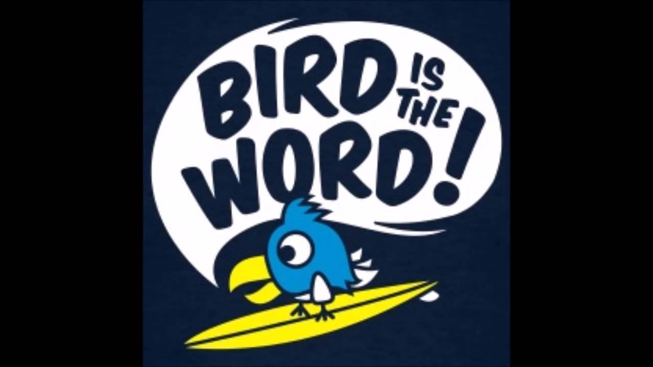 timer 1m surf the bird youtube