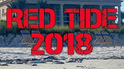 Red Tide, What is Happening to South Florida?