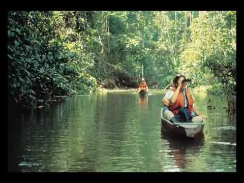 На далёкой Амазонке