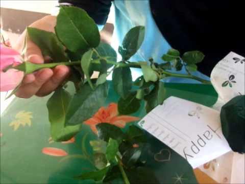 การจัดดอกไม้แบบทรงครึ่งทรงกลม