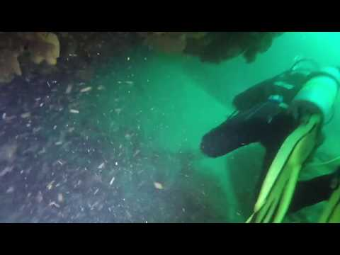 Old Mans Hat Pass Through Sydney Harbour Dive