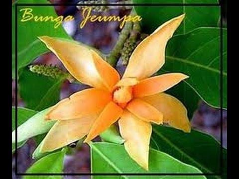 Bungong Jeumpa Karaoke