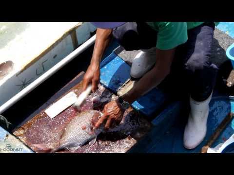 Sai Kung - Hong Kong - Live Seafood Market
