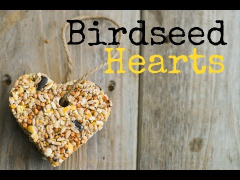 How to make bird seed balls with honey