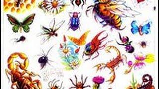 Забавные насекомые, жуки, червяки, тараканы. (Funny insects)