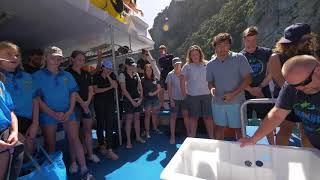 Rescued Green Sea Turtles Released Back to Sea