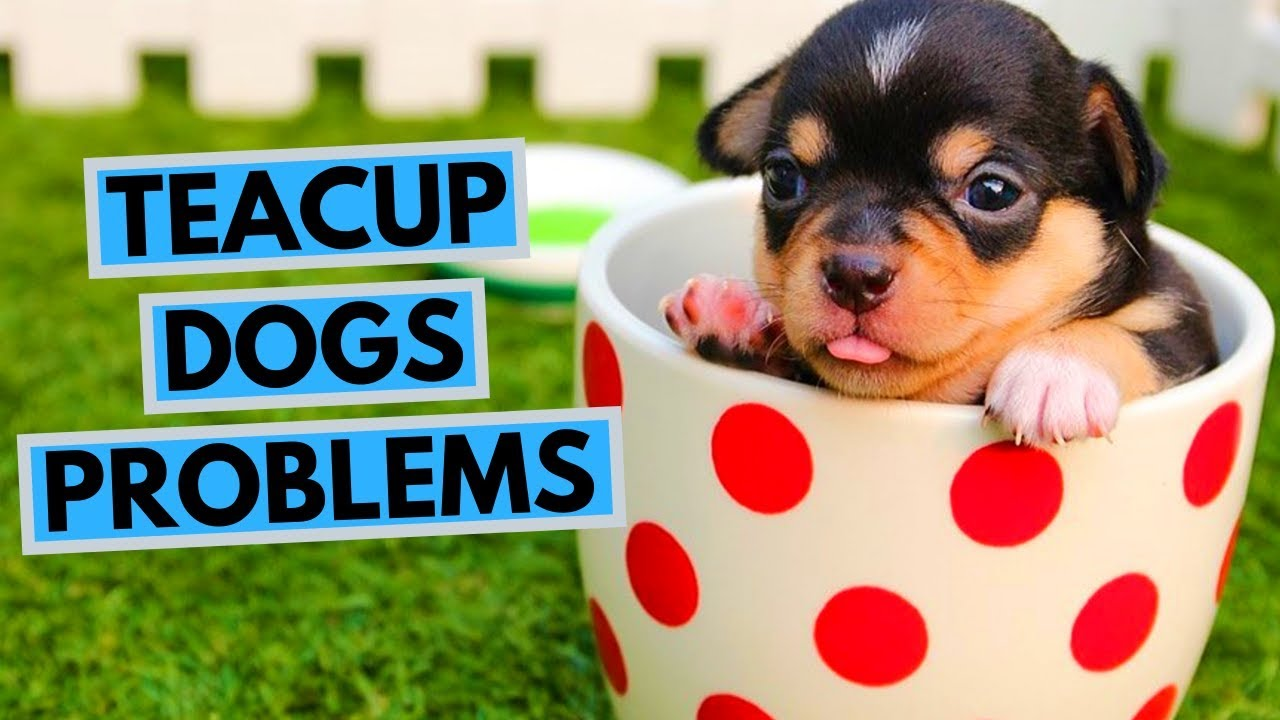 Problems With Teacup Dogs You