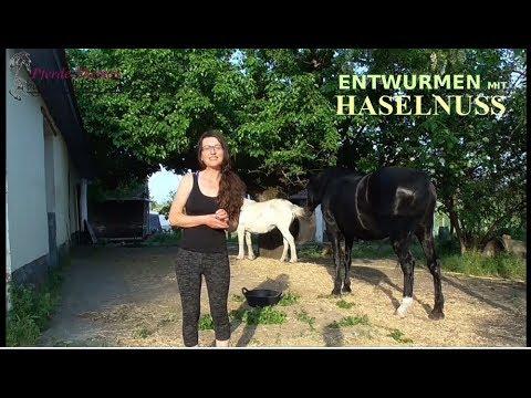 haselnuss-für-pferde-gegen-parasiten