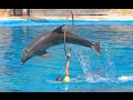 Circus Show | Circus Amazing Talent Magic Show. Parrot, Elephant, Monkey, Dog, Cat, Dolphins