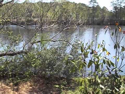 BACK BAY NATIONAL WILDLIFE REFUGE OFFICE AND LAKE IN VIRGINIA BEACH, VIRGINIA   1003442