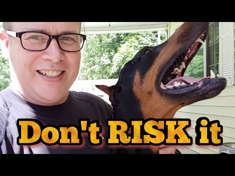 Doberman Pinscher Insurance - Liability and Health YOU NEED TO KNOW
