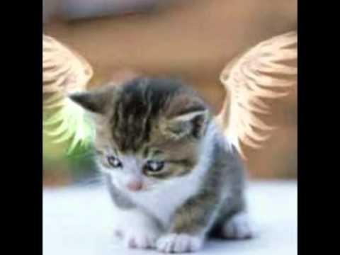 Katzen zu verschenken youtube for Kuchenzeile zu verschenken