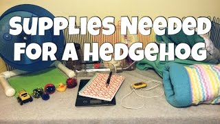 Hedgehog Care: Supplies You Need for a Hedgehog