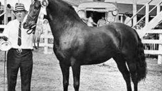 The Original Morgan Horse