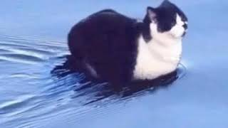 cat swimming song