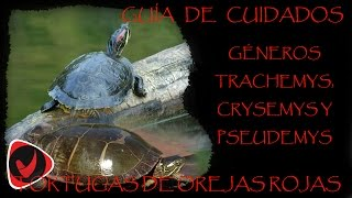 Guía de cuidados  - Tortugas del género Trachemys, Chrysemys y Pseudemys, orejas rojas o japonesas