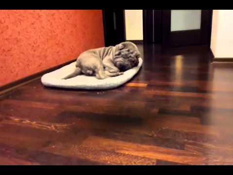 видео: Это не я сделал