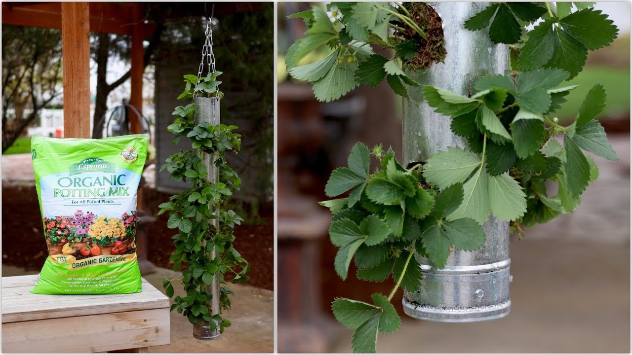 Build Your Own Vertical Strawberry Planter - Full Version on homemade jewelry, homemade driveways, homemade ornaments, homemade flowers, homemade trees, homemade tools, homemade tillers, homemade lamps, homemade bird houses, homemade walls, homemade boxes, homemade seeders, homemade bird baths, homemade accessories, homemade decks, homemade art,