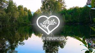 """Телеканал """"Живая природа"""" (Лесное озеро)"""