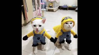 cats in funny Halloween costumes