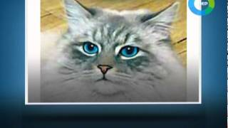 Продажа кота Дорофея. Эфир 01.04.2012