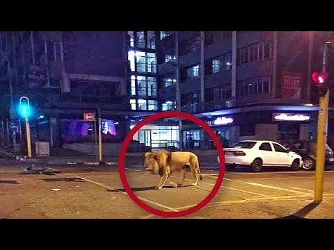 7 TEMIBLES ANIMALES captados caminando en las CIUDADES