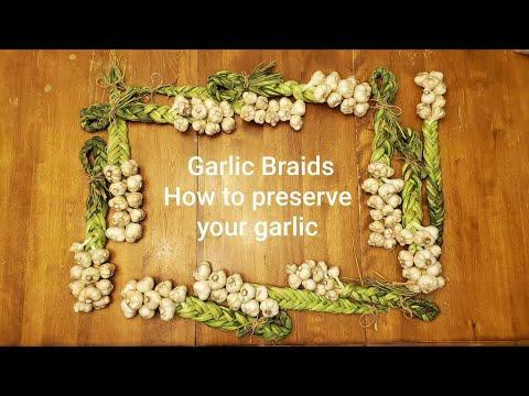 Braiding Garlic